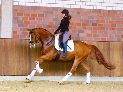 Von Belissimo #Wallach, *2015, 1,68m # Dressurpferde L; springt Wechsel# Preis: 55.000€