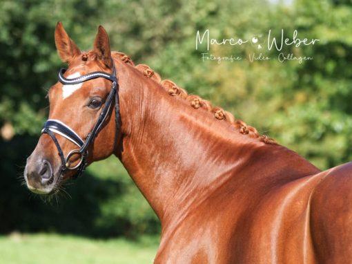 Von Fürst Romancier #Stute, *2016, 1,69m # Dressurpferd. A # Preis: 25.000€